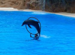 السباحه مع الدولفين فى شرم الشيخ