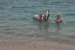 رحلة ركوب الخيل على شاطئ البحر فى شرم الشيخ
